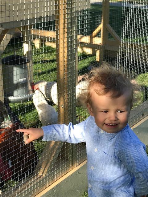 henkka edestä ja kanat